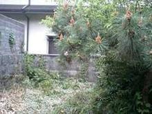 おがのおーがにっくらいふ-2008年05月04日 松竹梅のある庭