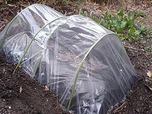 おがのおーがにっくらいふ-100227 サツマイモの育苗用トンネル.jpg