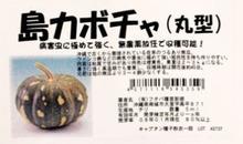 おがのおーがにっくらいふ(★´ひ`★)ゞ-島カボチャ 丸型