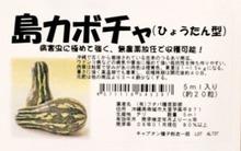 おがのおーがにっくらいふ(★´ひ`★)ゞ-島カボチャ ひょうたん型