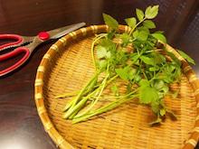 おがのおーがにっくらいふ(★´ひ`★)ゞ-セリの収穫.jpg
