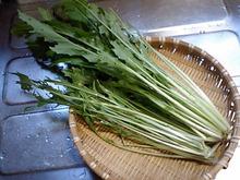 おがのおーがにっくらいふ(★´ひ`★)ゞ-09.06.12 収穫