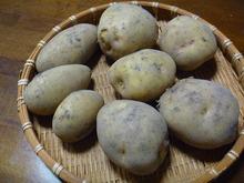 おがのおーがにっくらいふ(★´ひ`★)ゞ-3種の芋