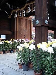 $おがのおーがにっくらいふ(★´ひ`★)ゞ-乃木神社にて02