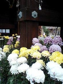 $おがのおーがにっくらいふ(★´ひ`★)ゞ-乃木神社にて01