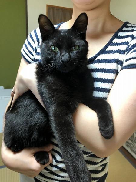 保護猫キャベツ_190511_0012