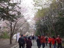北海道神宮境内から円山公園へ