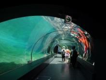 10:28 水中トンネル
