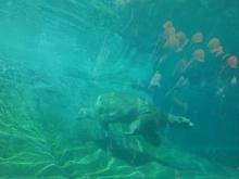 10:28 ホッキョクグマが水中にきました
