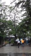 14:47 オガタマの木