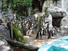 14:49 ペンギン