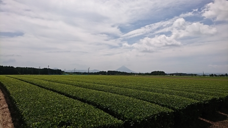 10:37 茶畑
