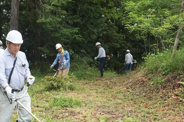 不要木を伐採するための場所も、まずは通りやすくするために草刈り作業