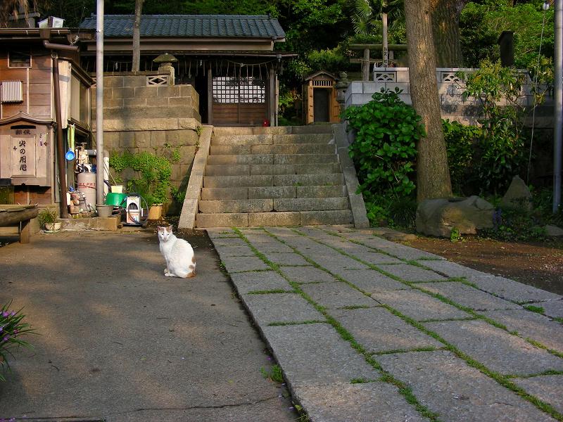 神社参道と白茶猫1