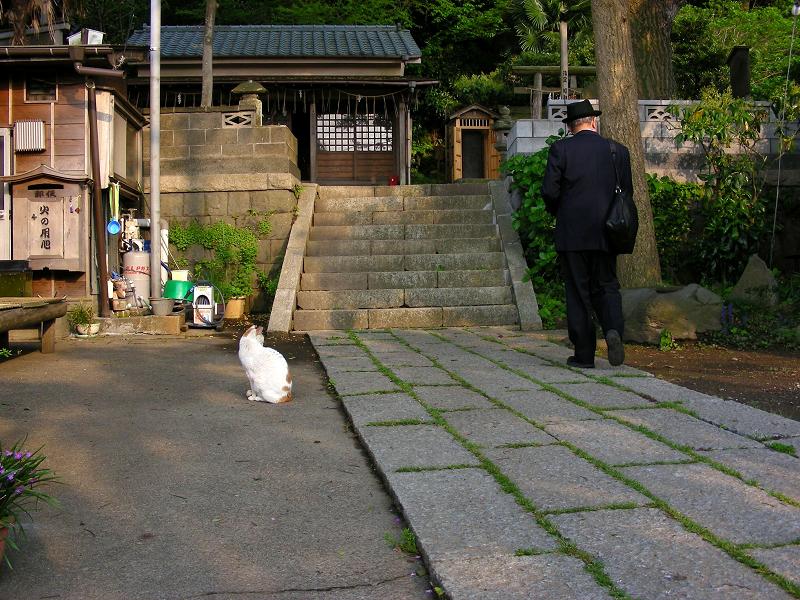 神社参道と白茶猫2
