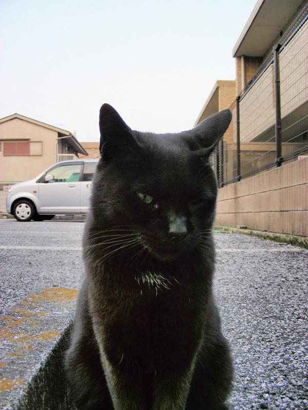 駐車場の黒猫3