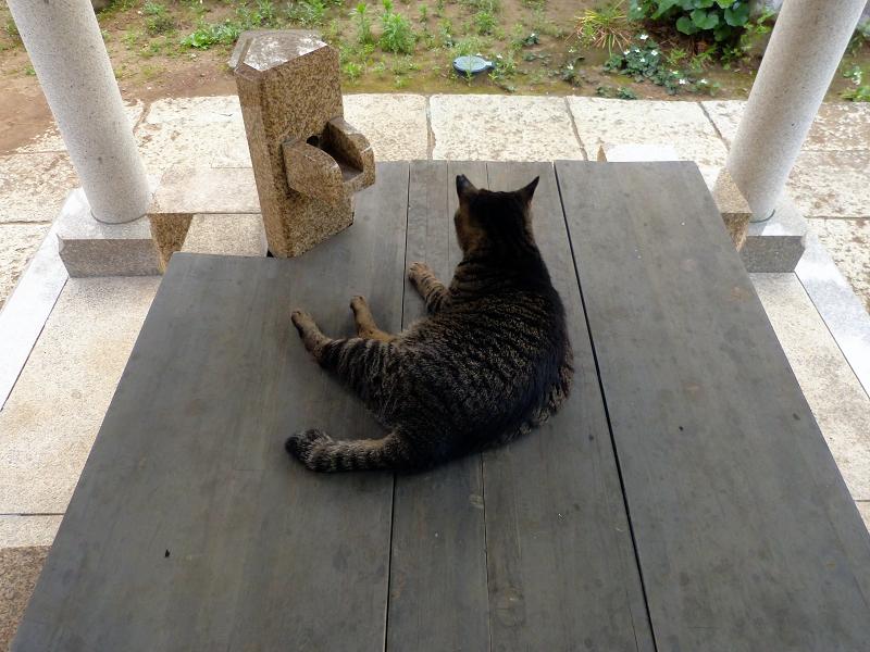 井戸の蓋のキジトラ猫1
