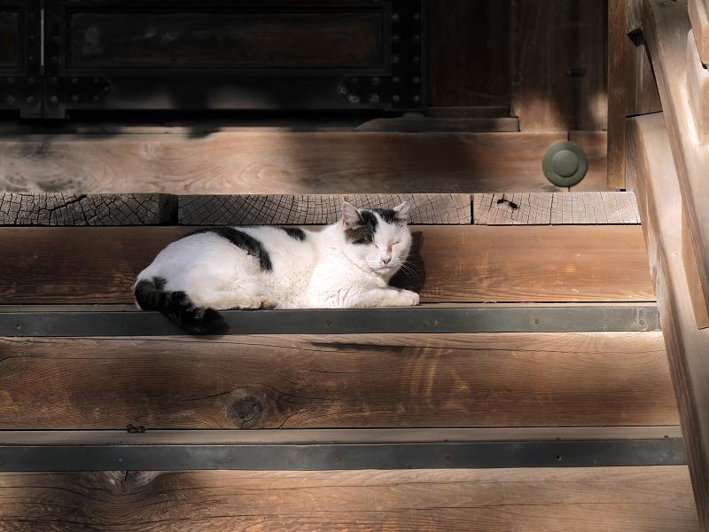 お堂階段の白キジ猫1