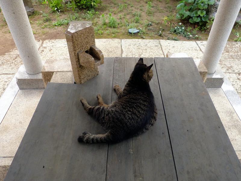 井戸の蓋のキジトラ猫2