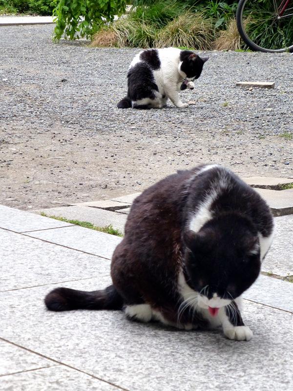 義理姉妹猫毛づくろい中1