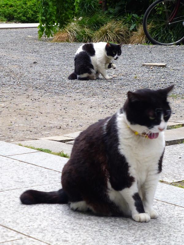 義理姉妹猫毛づくろい中2