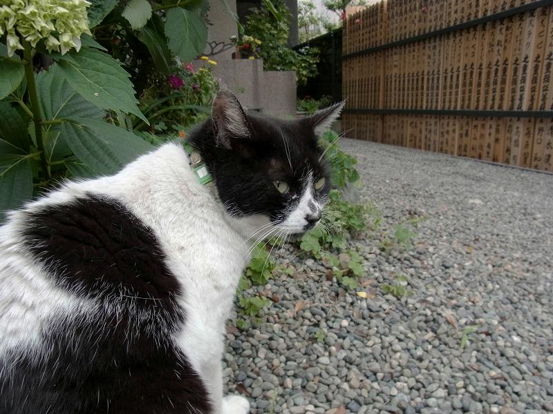 境内の白黒猫1