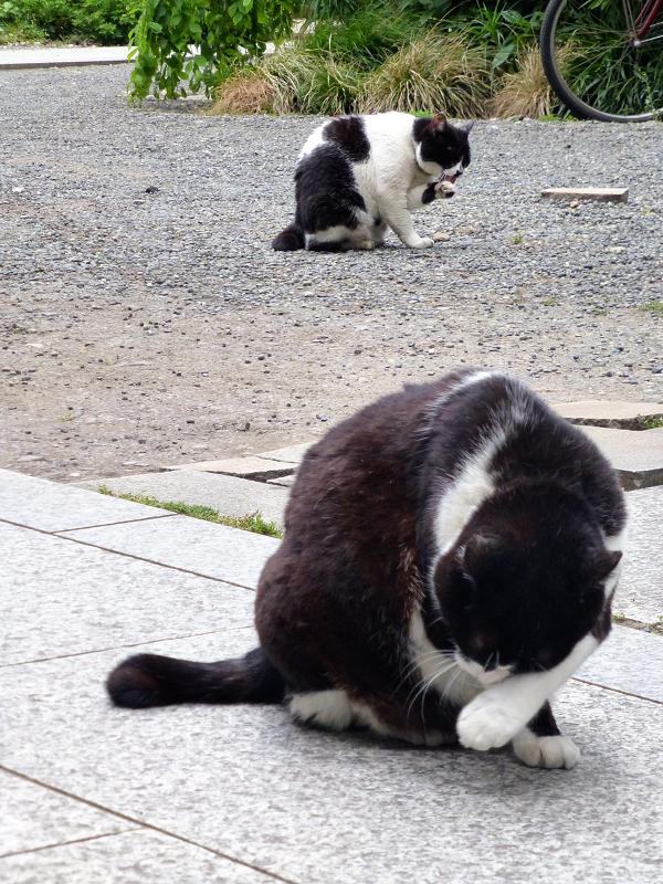 義理姉妹猫毛づくろい中3