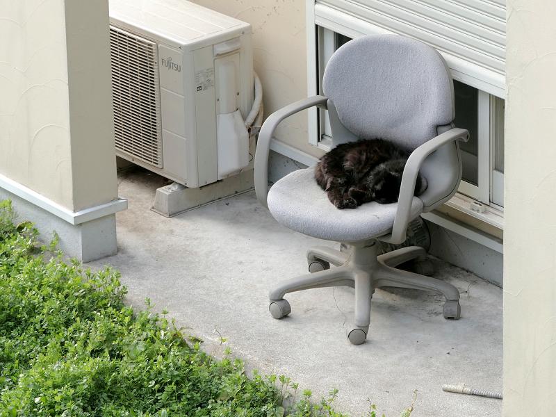 空地で寝ている黒系の猫2