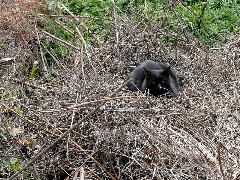 空地で寝ている黒系の猫3