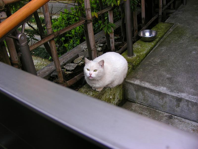勝手口の白猫