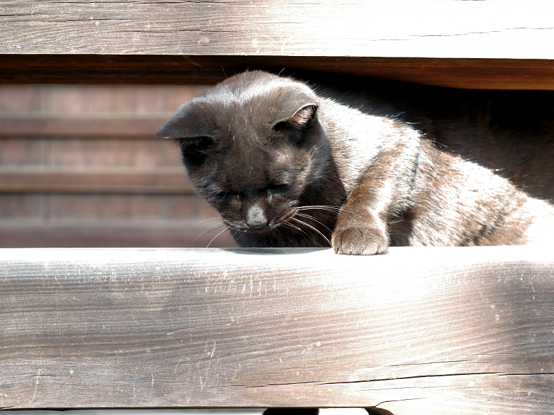 お堂の濡れ縁から出てきた黒猫1
