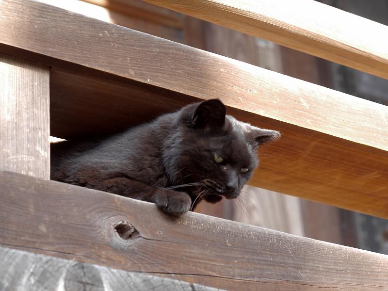 お堂の濡れ縁から出てきた黒猫3