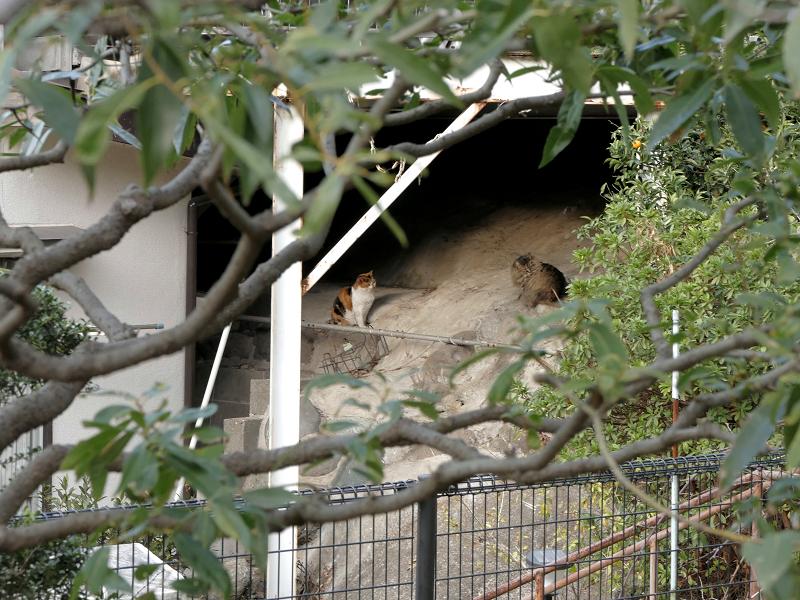 駐車スペース下の猫たち1