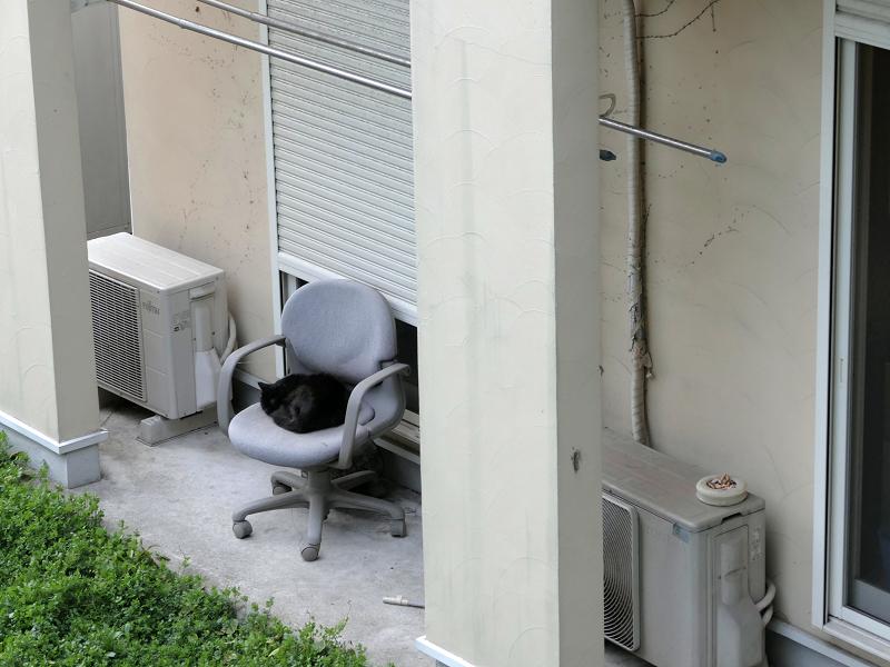 グレーの椅子と黒猫1