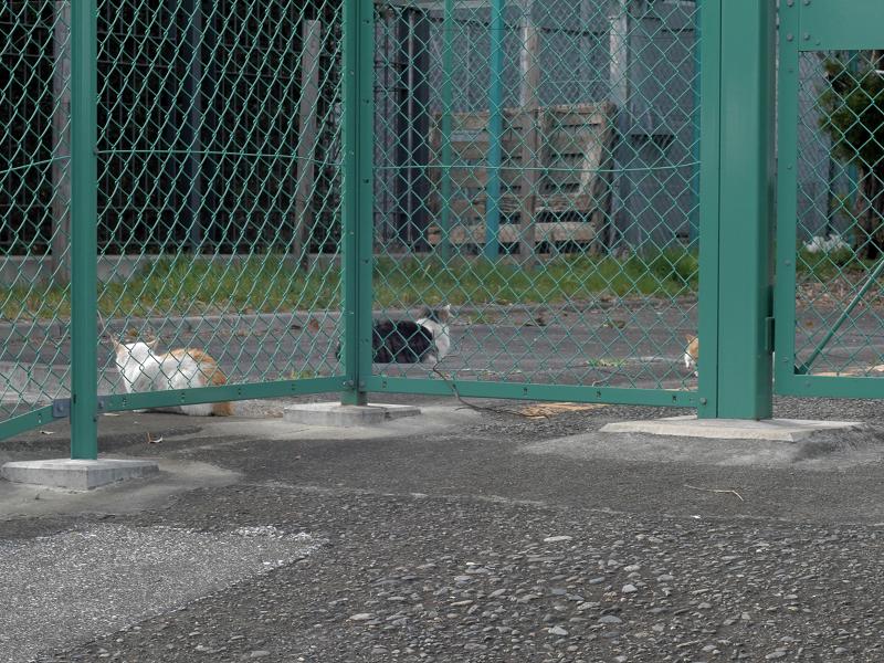 フェンス向こう空き地の猫たち1