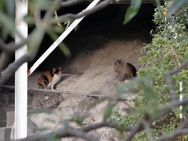 駐車スペース下の猫たち2