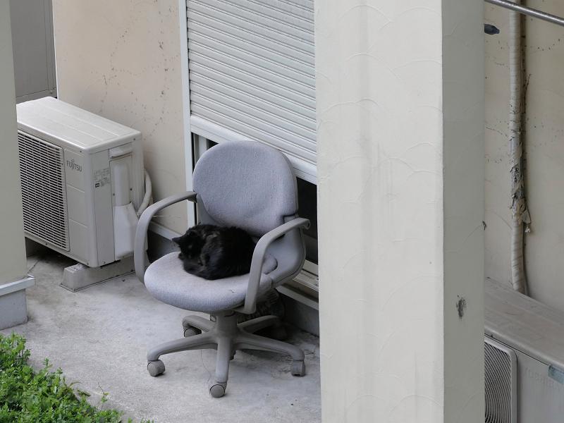 グレーの椅子と黒猫2
