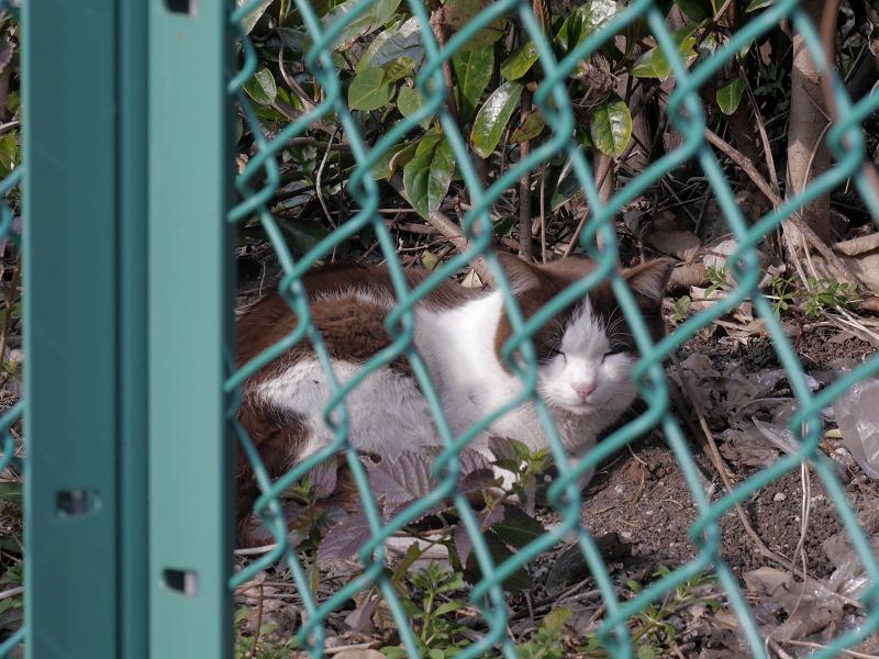 フェンス向こう空き地の猫たち3