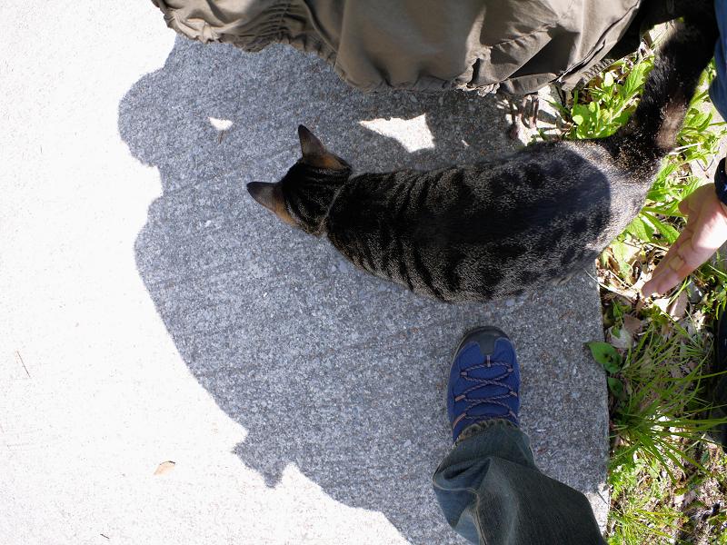 草むらから出てきたキジトラ猫2