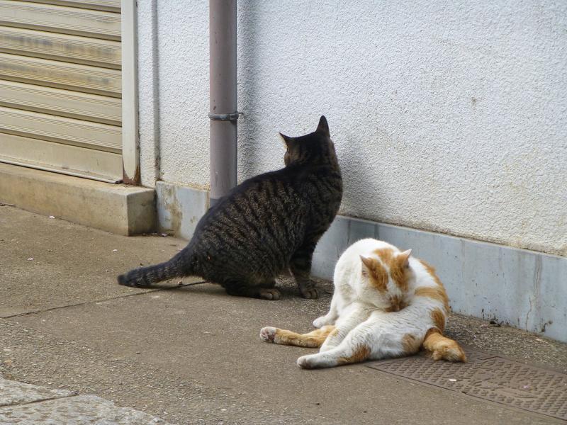 仲良しな白茶猫とキジトラ猫3