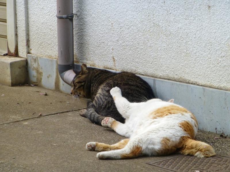 仲良しな白茶猫とキジトラ猫4