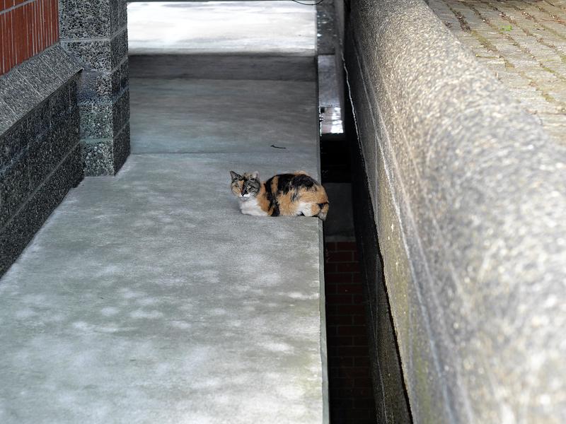 通路に三毛猫1