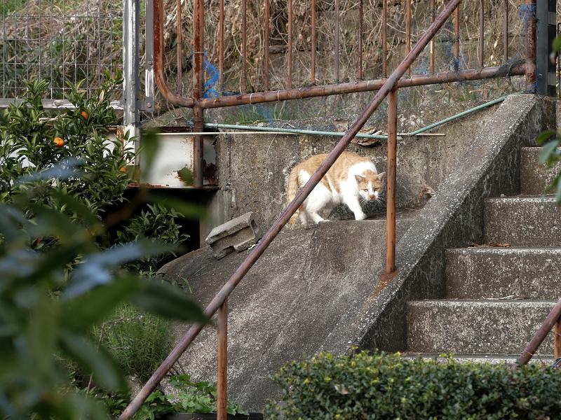 斜面から登場した猫2
