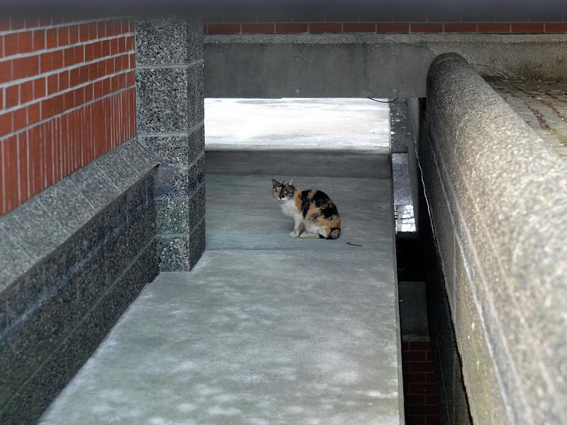 通路に三毛猫2