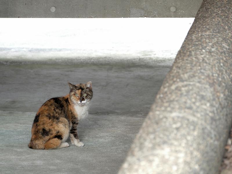 通路に三毛猫3