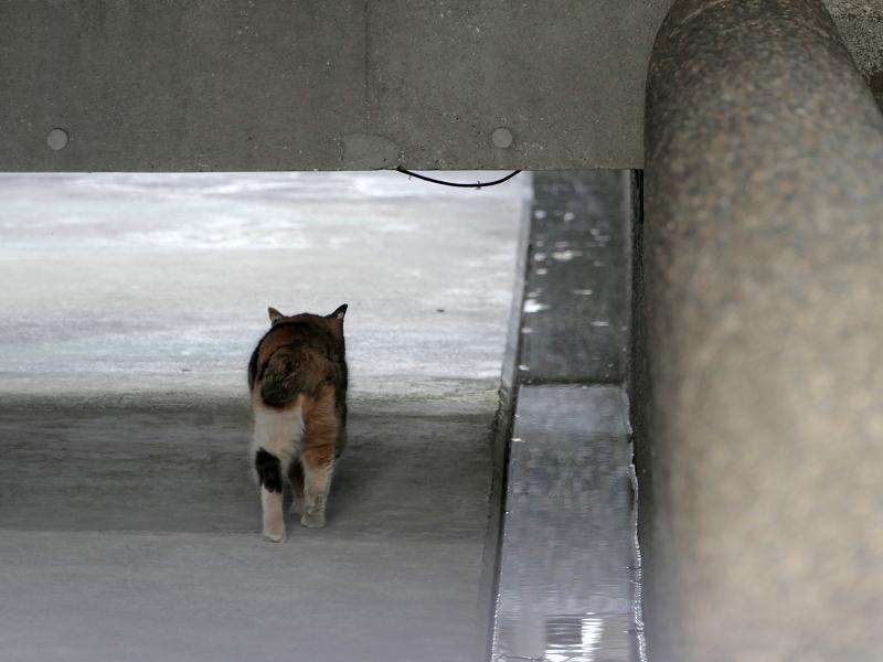 通路に三毛猫4
