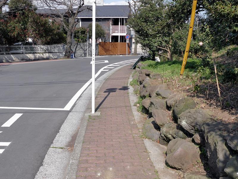 歩道横空き地の白黒猫1