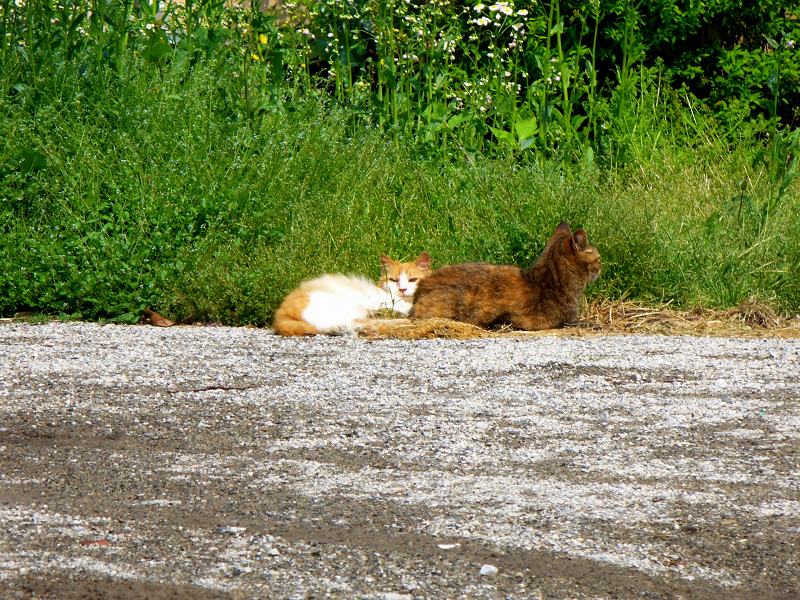 町なか空地の猫たち1