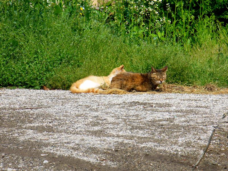 町なか空地の猫たち2