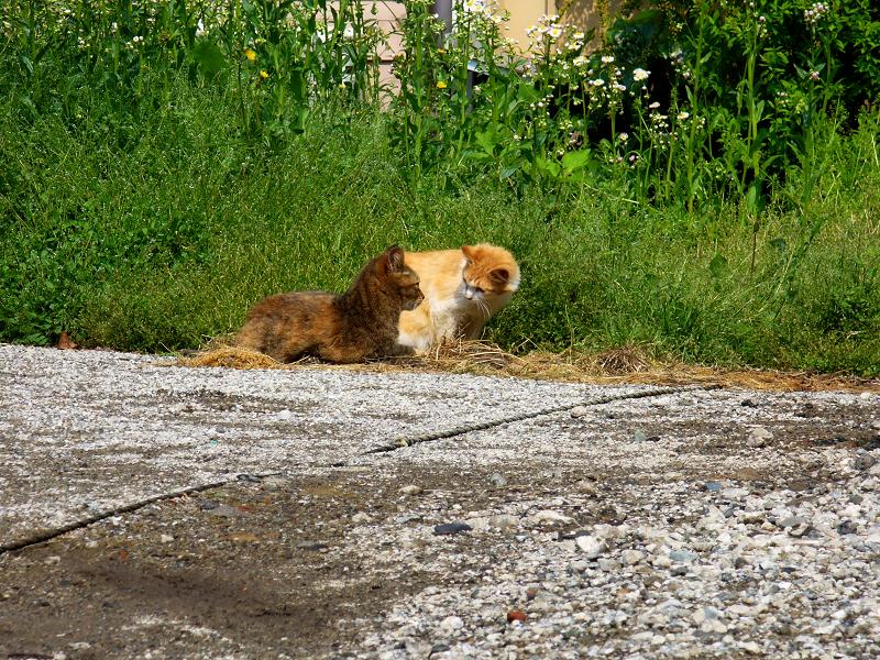 町なか空地の猫たち3